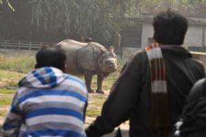 Alipore Zoo by Team Pothik