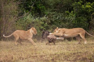 WILDLIFE IN ACTION by Rajarshi Banerji