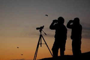 Bird Watching Spots Near Kolkata by Team Pothik