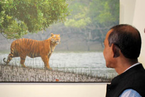 Photo exhibition exclusively on Royal Bengal Tigers of Sundarban