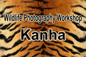 Wildlife Photography Workshop : Kanha by Simana Chhariye Travel Club