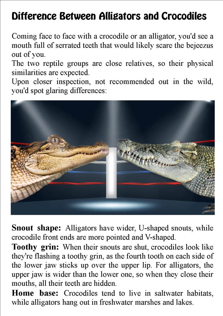 Difference Between Alligators and Crocodiles